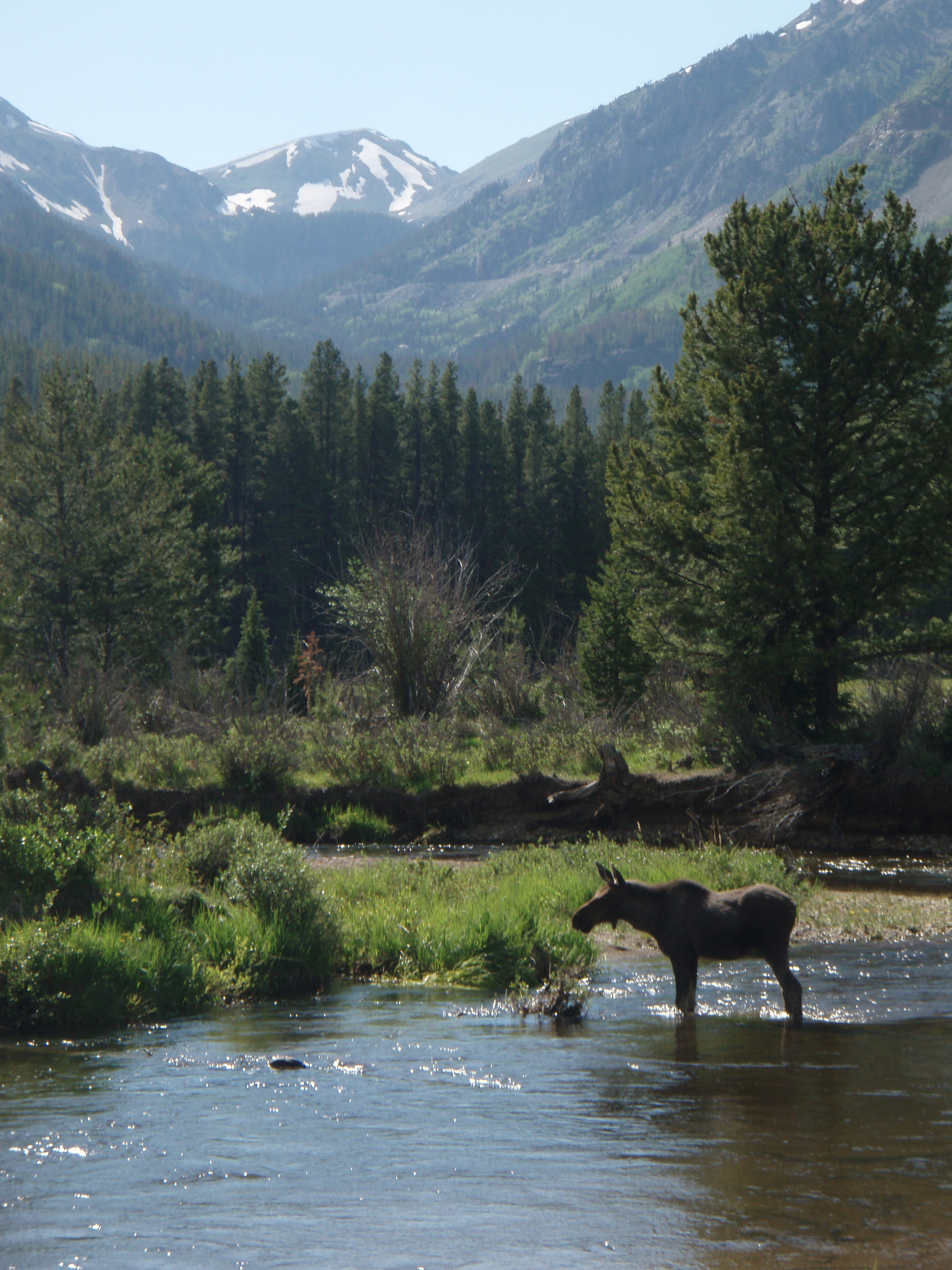 Elk Hunting in Colorado's GMU 18 - Grand County - HuntScore